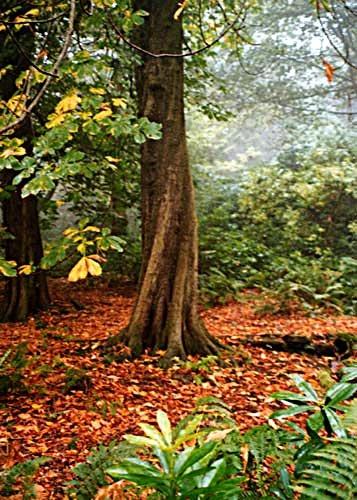 Autumnal Tree by heidi
