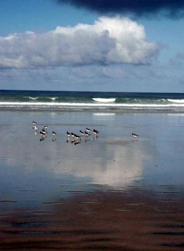 Seagulls on the shoreline by heidi