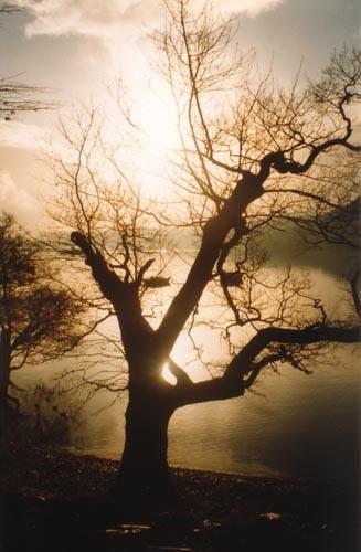 Tree in Winter by heidi