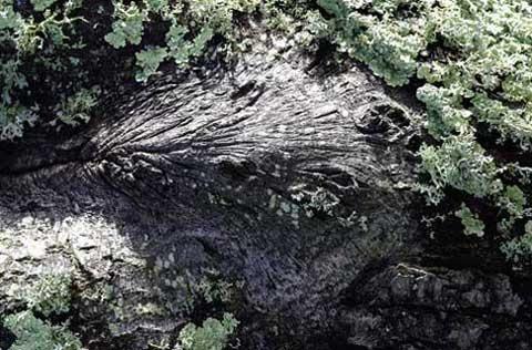 Tree Wrinkles by Linda