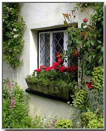 The Windowbox