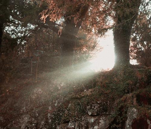 Morning Light by heidi