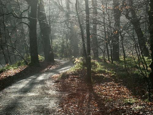 Respryn in the Mist by Saxon Marsh