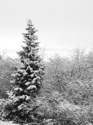 Prayer garden in snow by Janet Pattison