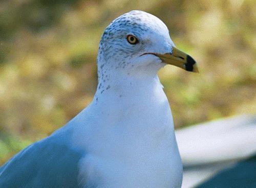 Gull by smig71