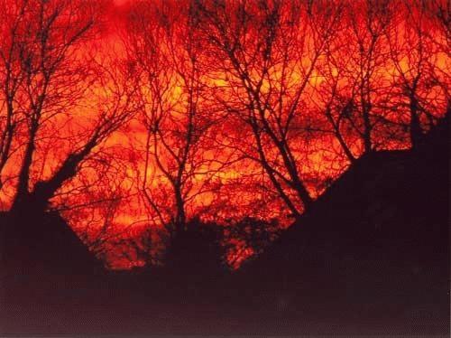 Sunset in November from my garden by alex.allen