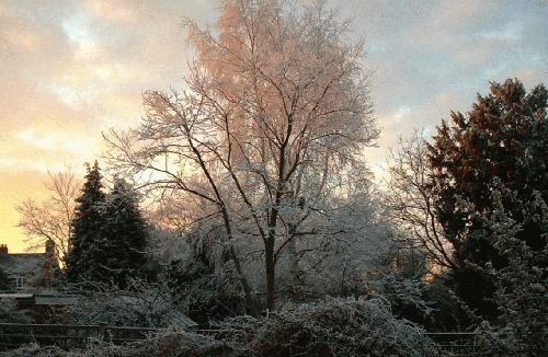 Early morning frost by alex.allen