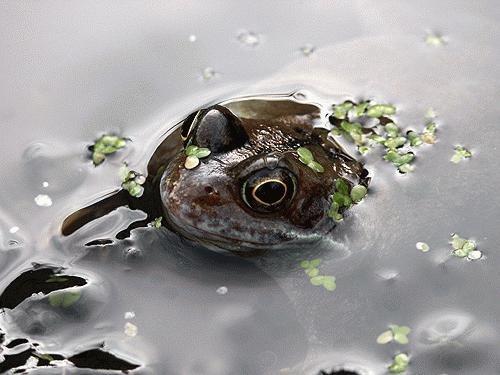 Frog 1 by Saxon Marsh