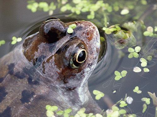 Frog 2 by Saxon Marsh