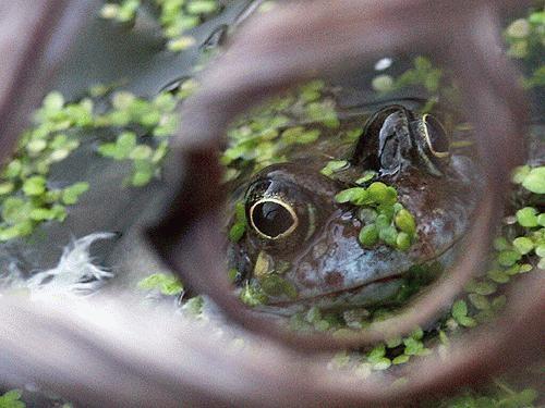 Frog 3 by Saxon Marsh