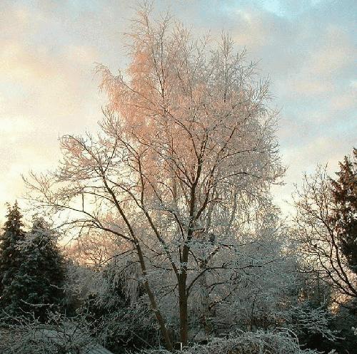 Frosty morning by alex.allen