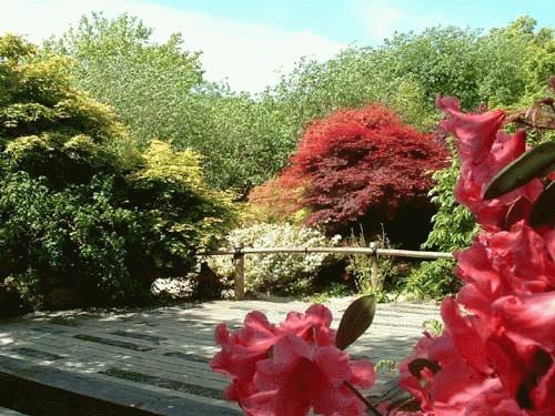Japanese Garden 2 by alex.allen