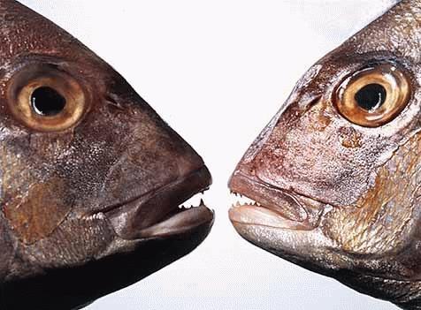 Fish eye by J-P