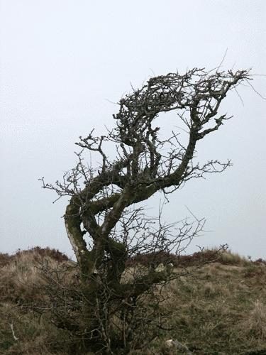 Tree by Saxon Marsh