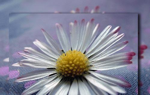 Daisy by marianne