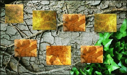 Autumn colours on bark by malleader