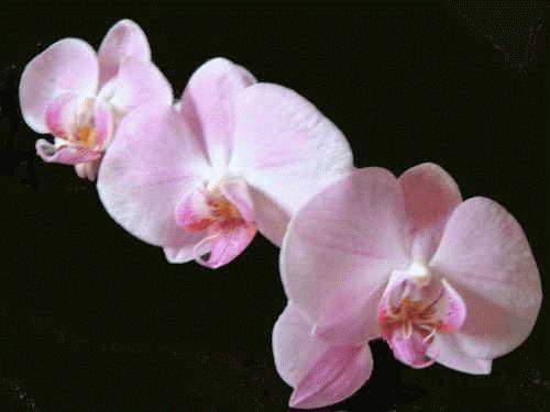 Orchids by alex.allen