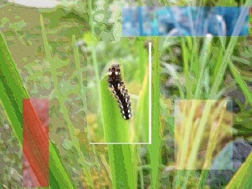 Catterpillar by deancarney
