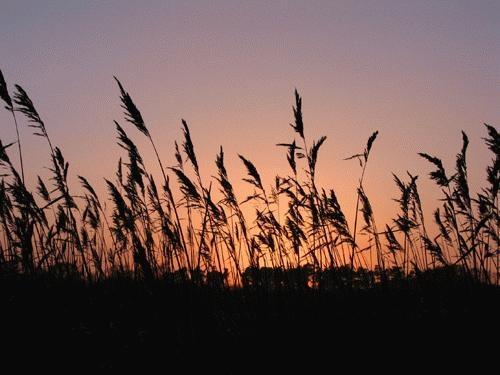 Sunset at Iken Cliff by ealdous