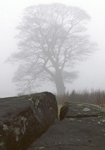 Misty moorland by AlanTW