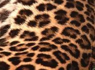 Leopard spots by Ian Pratt