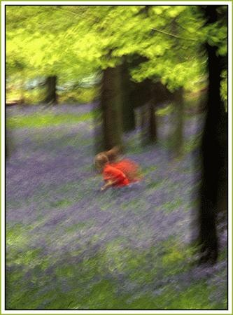 picking bluebells by colin beeley