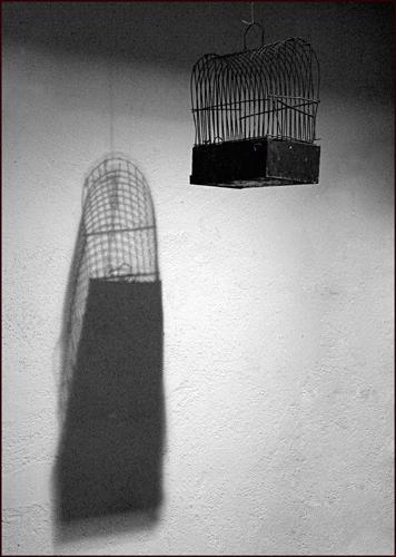 Bird cage by colin beeley