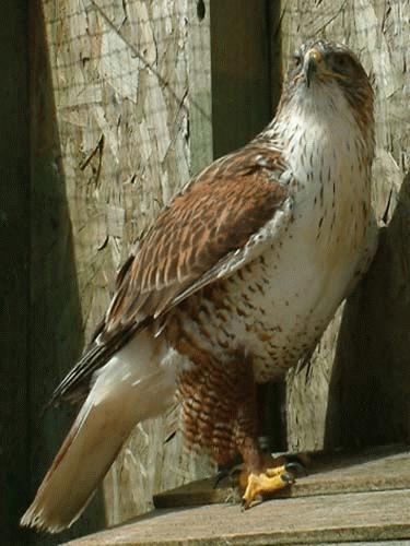 Bird of prey by alex.allen