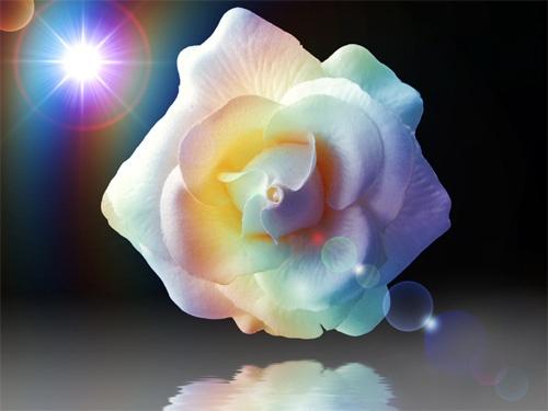 Flower by Steel