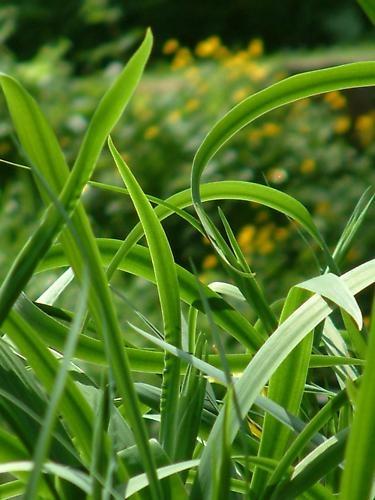 Windy Iris by newshot