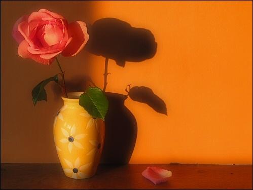 Evening Rose V2 by edz2001