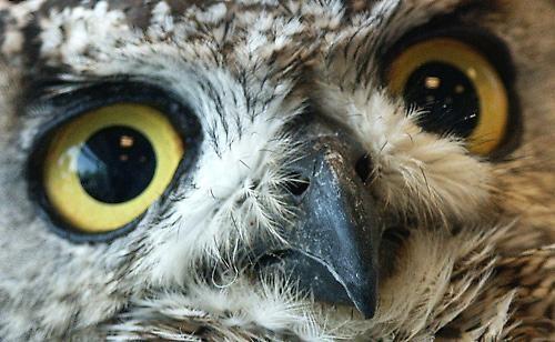 Owl by Saxon Marsh