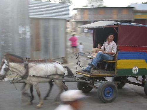 horse taxi by ihana