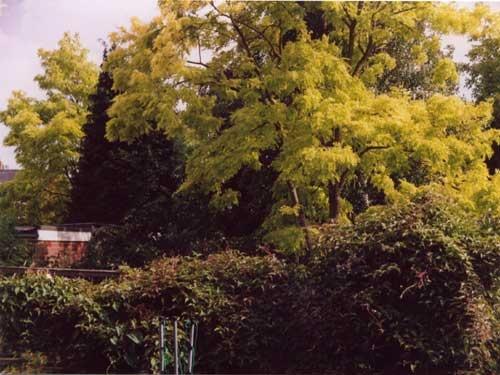 Trees by alex.allen