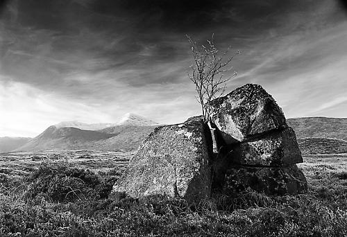 Tree in Stone by peterpaterson