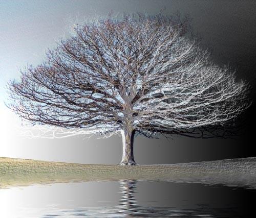Lone tree by Steel