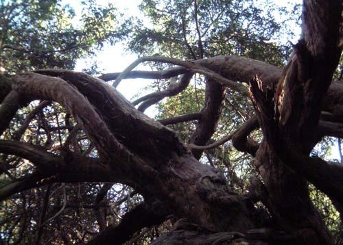 Tree Crawler by wendy9