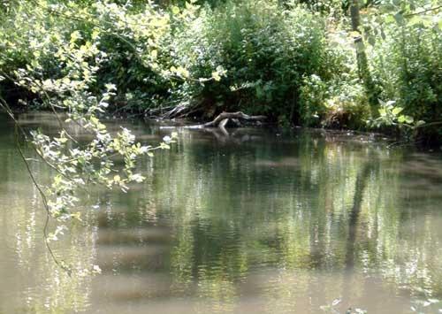 Reflective Lake by wendy9