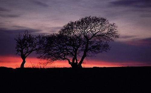 Trees at dusk by Ian Pratt