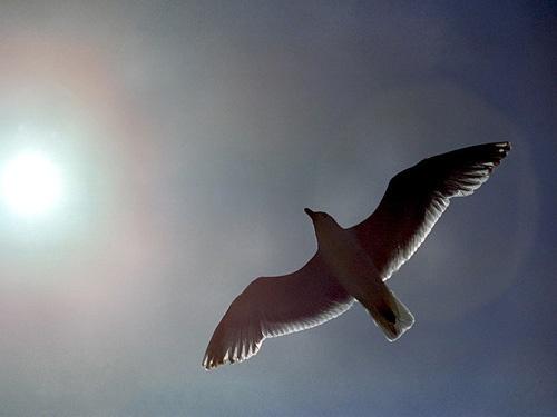Free Bird by Miles Herbert