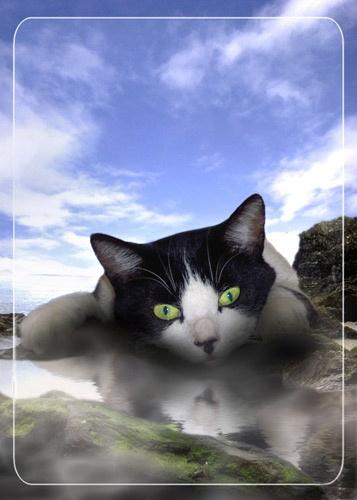 Beach Cat by Steel