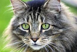 Green Eye'd Lady