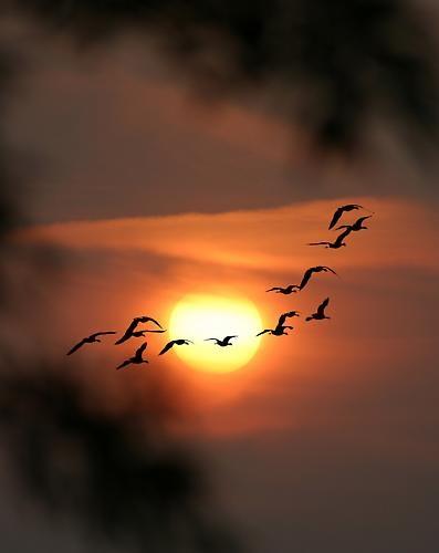 Evening Flight by Ray Willmott