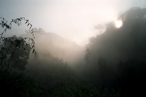 Thai Rain Forest by simonf