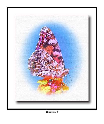 Butterfly 2 by blu