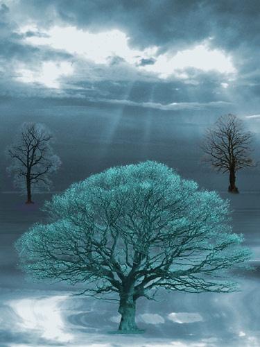 Trees by peterkent