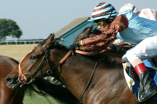 Jockey by pjc1882