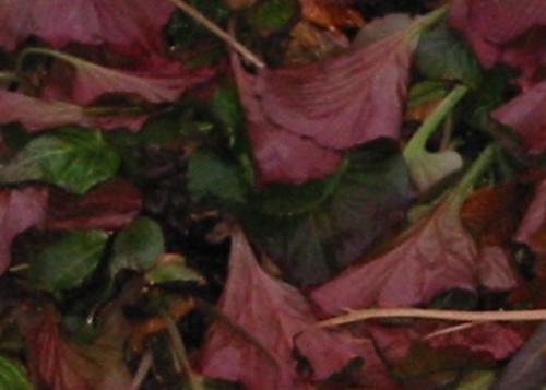 Leafage by gagsy