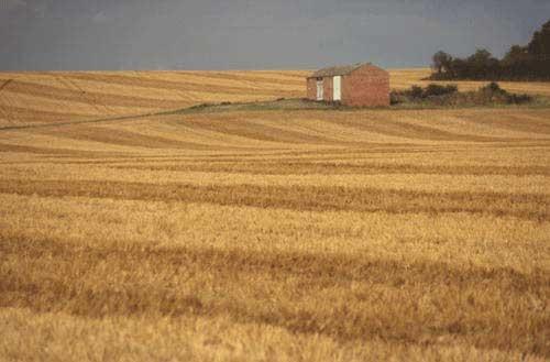 Barn on Corn Field by davemo