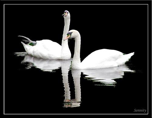 Serenity by digicammad